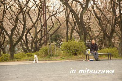 三ツ沢公園老人と犬.jpg