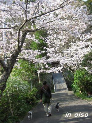 大磯神社.jpg