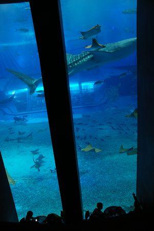 水族館2.jpg