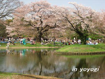 代々木桜と池.jpg